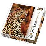 【自然攝影系列拼圖-1000片】獵豹Leopard